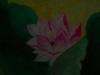 Dscn6701_jpg.jpg