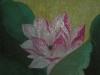 Dscn6703_jpg.jpg